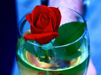 start_rose